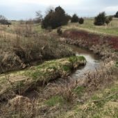 This Iowa stream was recently resloped with cedar revetments, and revegetated with diverse trees, shrubs, and grasses.