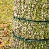 TreeGirdle