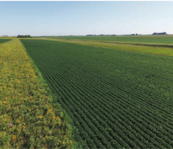 An aerial view of prairie strips in an Iowa crop field. Photo by Tim Youngquist.